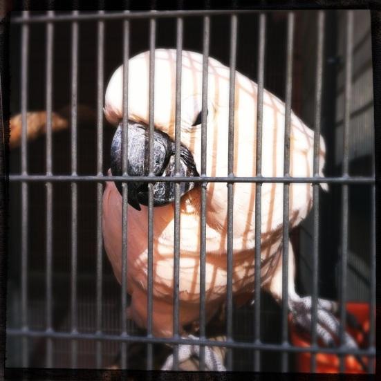 R. Thomas Birds